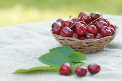 Fresh organic cherries Royalty Free Stock Photos