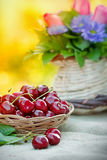 Fresh organic cherries close up Stock Image
