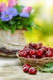 Fresh organic cherries in wicker basket Royalty Free Stock Photo