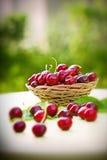 Fresh organic cherries in wicker basket Royalty Free Stock Photography