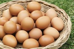 Fresh organic chicken Eggs in the basket. Made form rattan Royalty Free Stock Photography