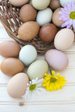 Fresh organic chickeneggs in old dusty basket on wooden backgrou Stock Photography