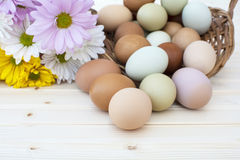 Fresh organic chickeneggs overflow out of basket with chrysanthe Stock Photography