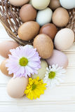 Fresh organic chickeneggs overflow out of basket with chrysanthe Royalty Free Stock Photography