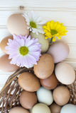 Fresh organic chickeneggs overflow out of basket with chrysanthe Stock Photos