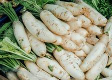 Fresh organic chinese radish or Raphanus sativus Linn. Sale in urban market Stock Image