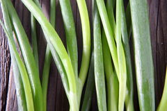 Fresh organic chives. Stock Images