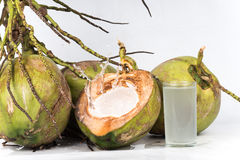 Fresh organic coconut Royalty Free Stock Photos