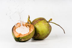 Fresh organic coconut Stock Photography