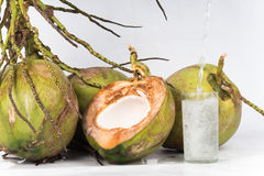 Fresh organic coconut Stock Image