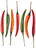 Fresh organic colorful chillies isolated on white Royalty Free Stock Images