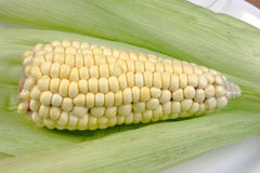 Fresh organic corn Royalty Free Stock Photos