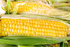 Fresh organic corn Stock Image