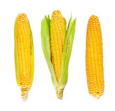 Fresh organic corn Stock Photography
