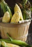 Fresh organic corn in basket Stock Images