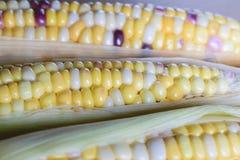 Fresh organic corn Stock Image