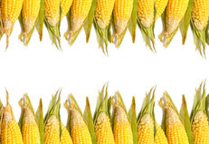 Fresh organic corn ,food background Royalty Free Stock Photos