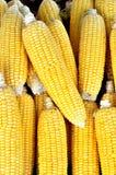 Fresh organic corn Stock Photo