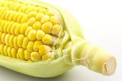 Fresh organic corn . Royalty Free Stock Images