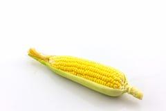 Fresh organic corn . Royalty Free Stock Photos