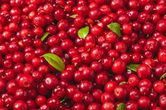 Fresh organic cranberries with green leaf over it - close up shot. Fresh juicy organic cranberries with green leaf over it - close up shot Stock Photos