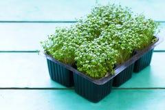 Fresh organic cress salad. Fresh organic green cress salad Stock Image