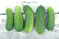 Fresh organic cucumber Stock Photography