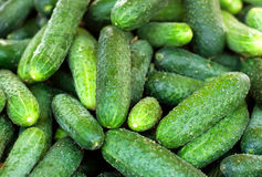 Fresh organic cucumbers from late autumn harvest. For sale in local market Stock Photos