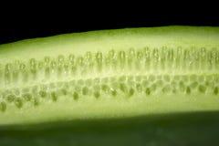 Fresh organic cucumbers on wood royalty free stock photos