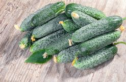 Fresh organic Cucumbers on wooden background. The Fresh organic Cucumbers on wooden background Royalty Free Stock Photos