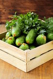 Fresh organic cucumbers. In a wooden box Stock Image