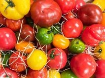 Fresh tomatoes for sale at farmers market royalty free stock images