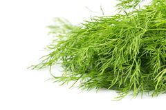 Fresh organic dill Stock Photography