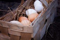 Fresh organic eggs in a basket. Fresh farm organic eggs in a basket Royalty Free Stock Photos