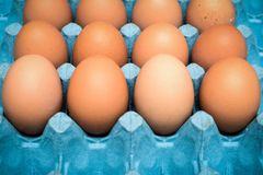 Fresh organic eggs in cardboard tray. From farm royalty free stock photo