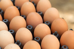 Fresh organic eggs from chicken farm agriculture for sale Royalty Free Stock Images