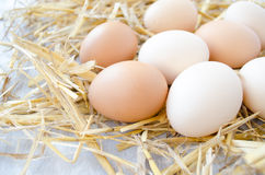 Fresh organic eggs on a straw Royalty Free Stock Images