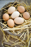 Fresh organic eggs in a wicker basket. Brown eggs on a straw bedding in a wicker basket with wooden and sackcloth background Royalty Free Stock Image