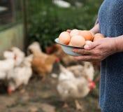 Fresh organic eggs Stock Image