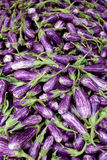 Fresh organic fairytale eggplant background, photo taken at loca Stock Photo