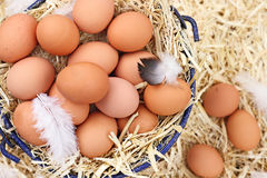 Fresh Organic Farm Eggs Royalty Free Stock Photos
