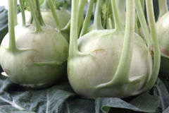 Fresh, organic, farm produce of kohlrabi Royalty Free Stock Photos