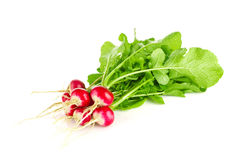Fresh organic farm radishes with green leaves Royalty Free Stock Photos