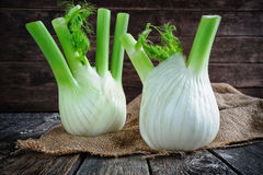 Fresh organic fennel bulbs Stock Photo