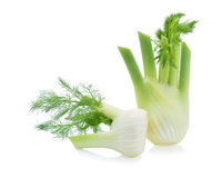 Fresh, organic fennel Royalty Free Stock Photo