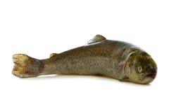 Fresh organic fish. Royalty Free Stock Images