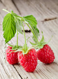 Fresh organic fruit - raspberry Royalty Free Stock Photo