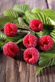 Fresh organic fruit - raspberry Stock Photography
