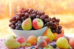 Fresh organic fruits - autumn harvest Stock Photos