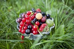 Fresh organic fruits in a glass bowl. On green grass stock image